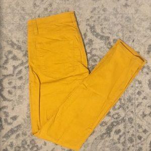 Canary yellow, modern yellow pant
